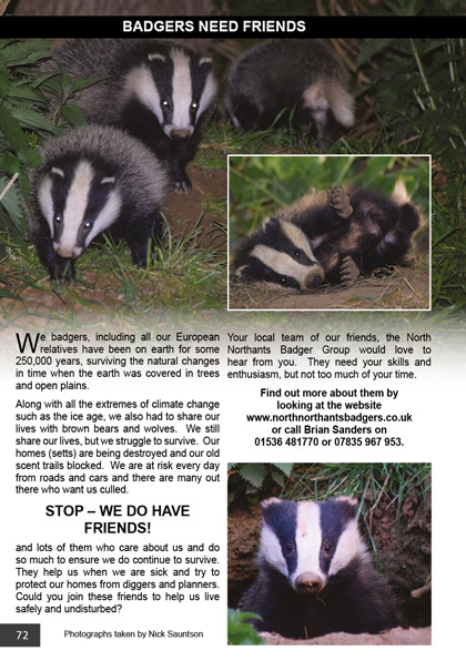 Badgers need friends